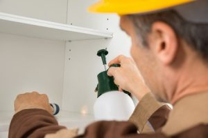 Pest Control service provided by the Naperville Pest Control Pros in the local area
